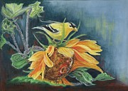 Yellow Leaves Pastels Prints - Finch on Sunflower Print by Leanne Whipple