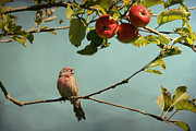 Textured Bird Mixed Media Posters - Finch Singing in an Apple Tree Poster by Peggy Collins