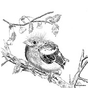 Finch Drawings - Finchers young by Hanneke Messelink-Anders