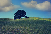 Lone Tree Photo Prints - Find It in the Simple Things Print by Laurie Search