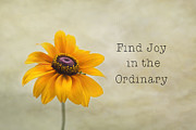 Kim Hojnacki - Find Joy