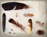 Woodcock Art - Finding Feathers 2 by Angie Rea