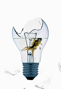 Lightbulb Prints - Fine Art Untitled No.28 Print by Caio Caldas