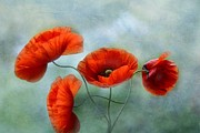 Fineartprint Prints - Fineart-Poppies Print by Irene Weiss