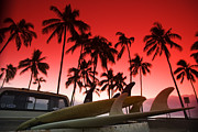 Surf Lifestyle Metal Prints - Fins n palms Metal Print by Sean Davey