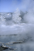 Rime Prints - Fire and Ice II - Yellowstone Print by Sandra Bronstein