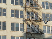 Riverwalk Prints - Fire Escape and Bird Print by Anita Burgermeister