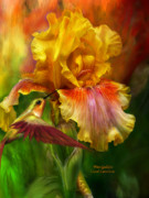Yellow Bearded Iris Framed Prints - Fire Goddess Framed Print by Carol Cavalaris