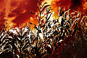 Flames Posters - Fire in the corn field Poster by Gaspar Avila