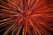 Fireworks Prints - Fire In The Sky Print by Carolyn Marshall