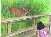 Boardwalk Paintings - Fire Island Deer by Sheryl Heatherly Hawkins