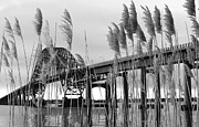Fire Island Framed Prints - Fire Island Inlet Bridge through the Reeds Framed Print by Vicki Jauron