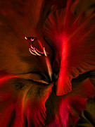 Red Gladiolus Photos - Fire Red Gladiola Flower by Jennie Marie Schell