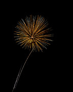 Fire Works Prints - Fire Works bursts Print by Gary Langley