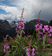 Mountains Digital Art - Fireweed and Hayden Spire by Heather Coen