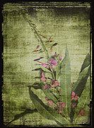 Rice Digital Art Prints - FIREWEED - Featured in Comfortable Art Group Print by EricaMaxine  Price