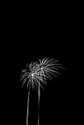 Firework Palm Trees Print by Darryl Dalton