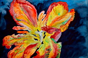 Big Tulip Prints - Fireworks Print by Beverley Harper Tinsley