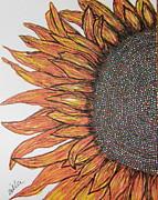 Marcia Weller-Wenbert - Firey Sunflower
