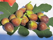 Figs Prints - First Fig Harvest Print by Tina M Wenger