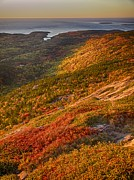 Golds Framed Prints - First Light on Cadillac Mountain Framed Print by Rob Wilson