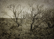 Bare Trees Metal Prints - First Snow Metal Print by Amy Weiss