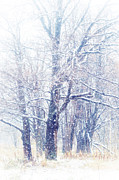 Jenny Rainbow Art Photography Prints - First Snow. Dreamy Wonderland Print by Jenny Rainbow
