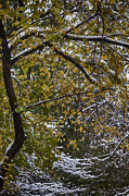 Leaves - First Snowfall 2 by Robert Ullmann