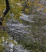 Leaves - First Snowfall 4 by Robert Ullmann