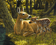 Whitetail Deer Painting Framed Prints - First Spring - variation Framed Print by Crista Forest