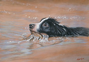 Collie Prints - First swim Print by John Silver