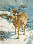 First Winter  - Fawn Print by Paul Krapf