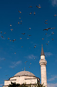 Flying Seagulls Framed Prints - Firuz Aga Mosque Seagulls Framed Print by Rick Piper Photography