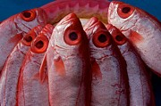 Fish Print by Gary Bridger