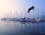 Randall Branham Art - Fish Hawk Sailing Foggy Sunrise by Randall Branham