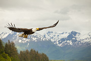 Eagle Metal Prints - Fish is on the Menu Metal Print by Tim Grams