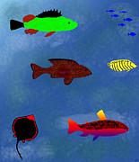 Kate Farrant - FISH