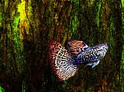 Colored Metal Prints - Fish Kingdom Colors  Metal Print by Mario  Perez
