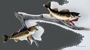 Also Digital Art - Fish Mount Set 06 B by Thomas Woolworth