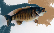 Carp Digital Art - Fish Mount Set 10 CC by Thomas Woolworth
