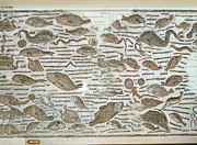 Etc. Photos - Fish Mural Pompeii by Jan Faul