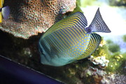 Inner Framed Prints - Fish - National Aquarium in Baltimore MD - 1212110 Framed Print by DC Photographer