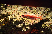 Fish - National Aquarium In Baltimore Md - 1212118 Print by DC Photographer