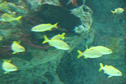 Fish - National Aquarium In Baltimore Md - 1212141 Print by DC Photographer