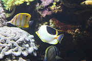 Fish - National Aquarium In Baltimore Md - 121239 Print by DC Photographer
