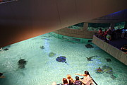 Dolphins Art - Fish - National Aquarium in Baltimore MD - 121286 by DC Photographer