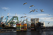 Moroccan Photos - Fisherman shoving away the seagulls in Essaouira harbour by Ruben Vicente