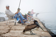 Mary Lee Dereske - Fishermen and Pelican
