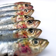 In A Row Metal Prints - Fishes Metal Print by Bernard Jaubert