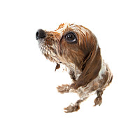 Tan Dog Prints - Fisheye wet Archie Print by Jane Rix